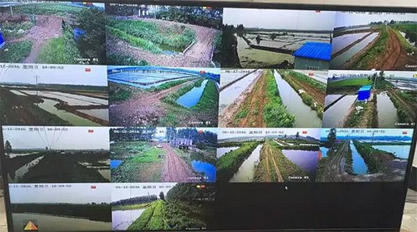 湖北荆香缘农业生态园无线监控工程